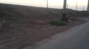 گراز ولگرد در آبادان!!!