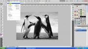 آموزش قدیمی سازی تصاویر رنگی در فتوشاپ