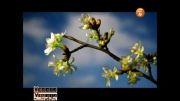 نماهنگ گل پونه با صدای حمید جبلی