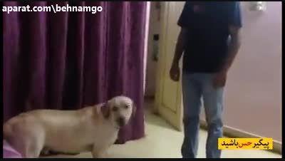 وفاداری سگ