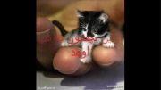 زندگی نامه گربه