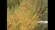 طبیعت زیبای آذرشهر استان آذربایجان شرقی