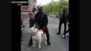 خطرناک ترین سگ جهان در خیابان!!