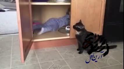 گربه زبل