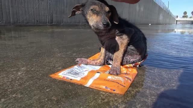 نجات سگ شجاع از حادثه غم انگیز...! HD