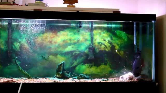 خوردن موش بزرگ توسط ماهی پیرانا
