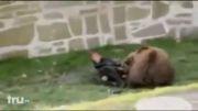 حمله کردن و خوردن یک انسان توسط یک خرس قهوهای