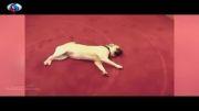 فیلم جانورانی که خود را به مردن می