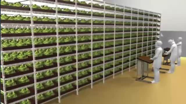 بزرگ ترین مزرعه ی درون ساختمانی در دنیا