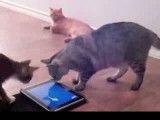بازیگوشی گربه ها