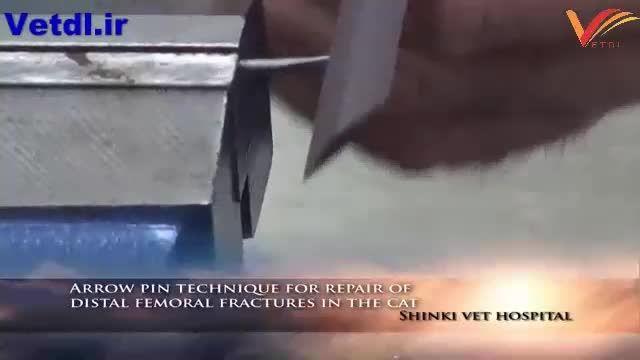 روش پین گذاری برای اصلاح  شکستگی استخوان ران در گربه(1)