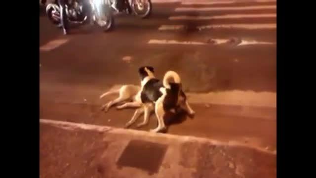 این سگ کشته شده سگ دیگر مراقبت کرده میکند الله اکبر