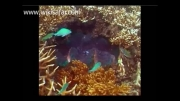 تصاویری زیبا از سواحل کوییزلند
