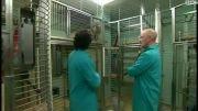 آزمایش روی حیوانات برای تشخیص بیماری های انسان