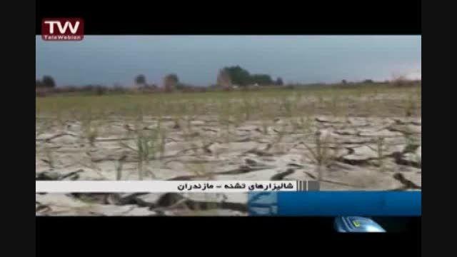 خشکسالی شالیزارها در میاندرود