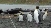 ضریب هوشی پنگوئن