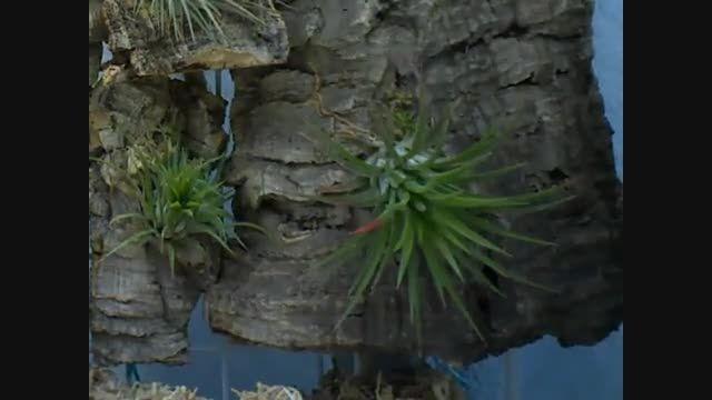 رشد گیاه هوازی (خیلی جالبه!)