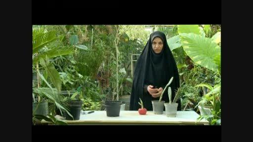 طرز پرورش و کاشت گیاه کاکتوس