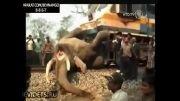 برخورد وحشتناک فیل با قطار....