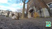 سرقت دوربین توسط سنجاب