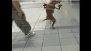 *_* سگ و این همه استعداد *_*