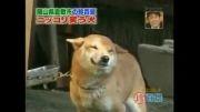 باور کنید این سگ می خندد!