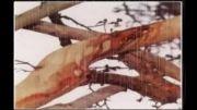 !!توجه!! معجزه درختی که در روز عاشورا خون جاری (گریه) میکند