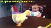 بچه نوزاد و مرغ تخم گذار