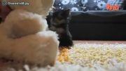 کوچک ترین سگ دنیا!!!