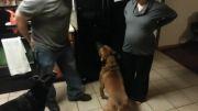 محافظت سگ باوفا از خانم باردار.......