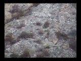 بز کوهی مازندران(ساری-کیاسر)-آکروبات بازی بسیار زیبا