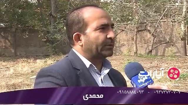 قطع شبانه درختان تنها باغ خیابان شهید عراقی