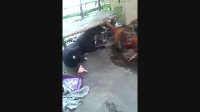 کلیپ دعوای خروس و سگ