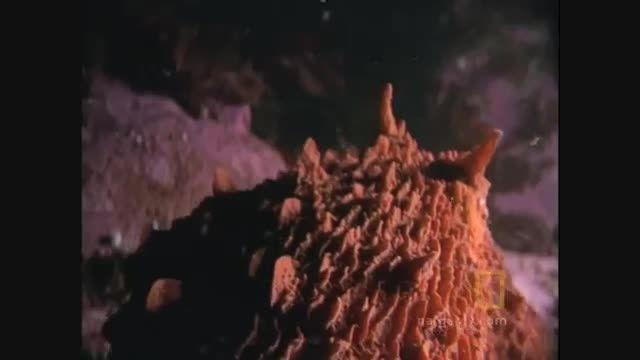 کشته شدن کوسه توسط اختاپوس غول پیکر!