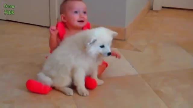 بازی کودک با سگ