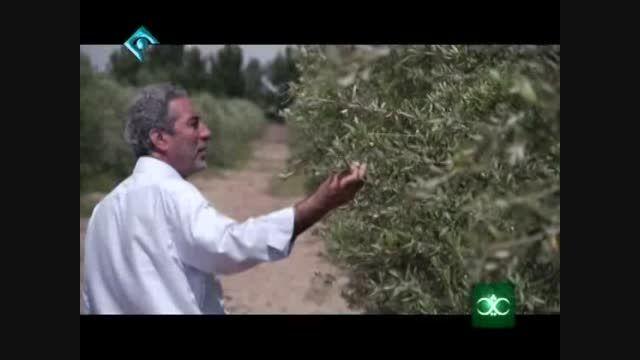فیلم کامل دومین برنامه کشاورزی ثریا- بخش دوم