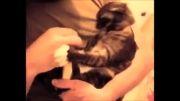 حملات گربه، قدرت گربه و سرعت گربه