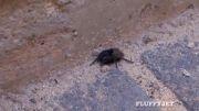 سگ نینجا . عنکبوت نینجا و فرض ترین عنکبوت که رطیل کم آورد