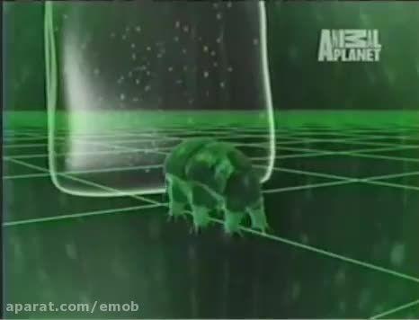 با سرسخت ترین جانور روی زمین آشنا شوید ۵