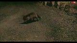اس.ام.اس بازی روباه مکار یا روباهی که عاشق یک آیفون شد!