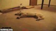 وقتی سگی خواب بد می بیند(ته خنده)