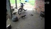 ترس گربه