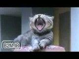 گربه می خندد!