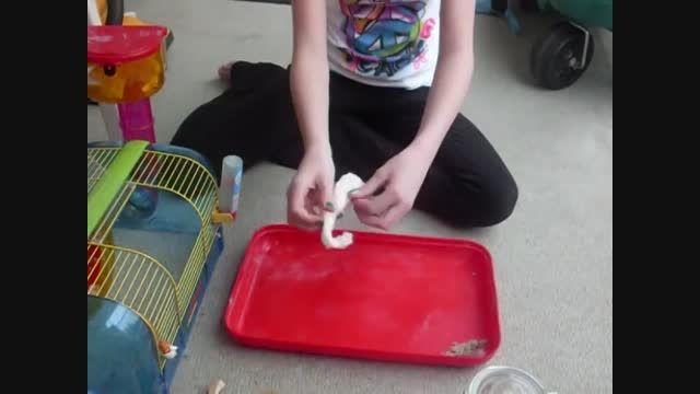 نحوه تمیز کردن قفس همستر