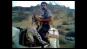 شکار بی رویه پلنگ  و گرگ در استان فارس