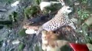 شکار نکنیم و به خلقت و حقوق حیوانات احترام بگذاریم