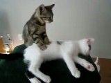 یه گربه اینجوری داشته باشه دیگه نیازی به مزدوج شدن نیست