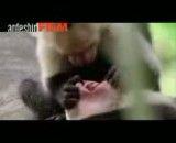 میمونی که دندان پزشک شد!!!!!!!!!