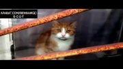 وقتی گربه افسرده میشود :(
