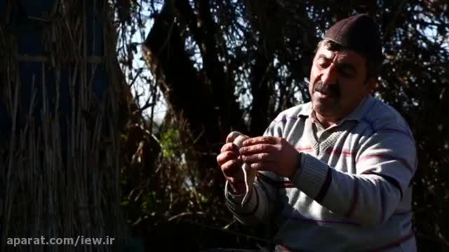 آنونس «مستند آزادی» با موضوع صید پرندگان در فریدونکنار